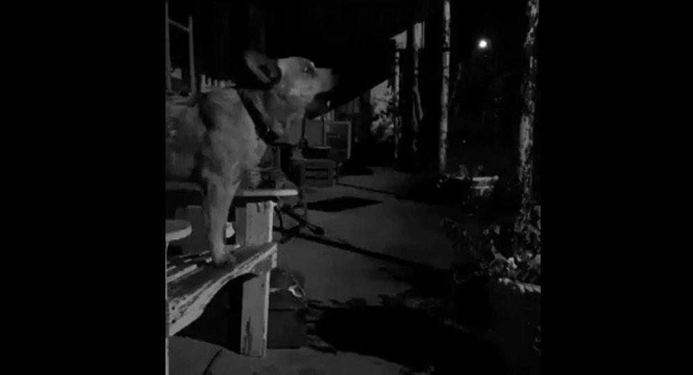 Cachorro canta música de Britney Spears