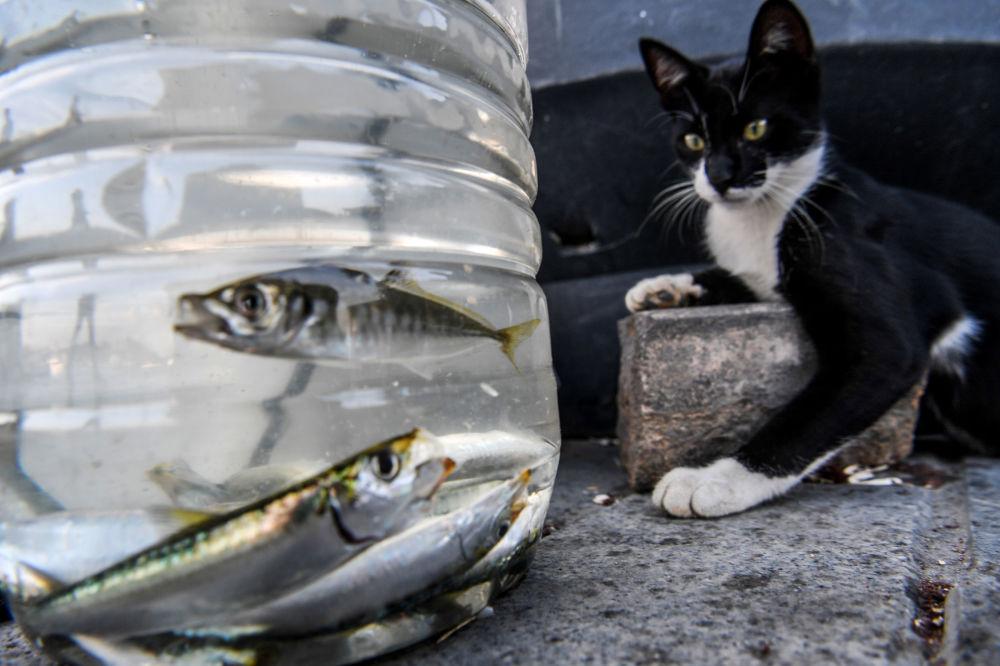 Gata observa os peixes em um contêiner de plástico em Istambul, na Turquia
