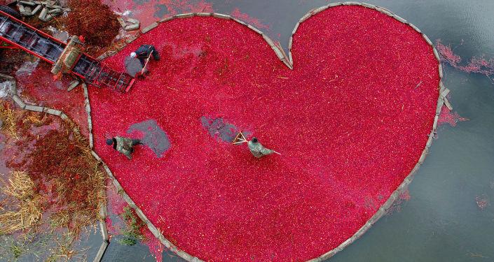 Coração de Oxicocos, foto vencedora na categoria O Meu Planeta