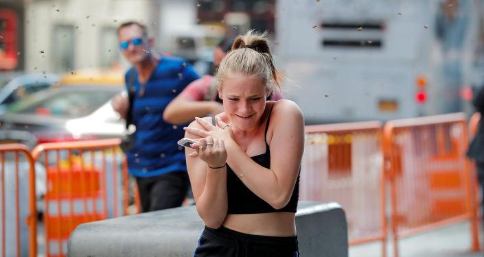 Um enxame de abelhas atacou uma barraca de cachorro-quente na Times Square