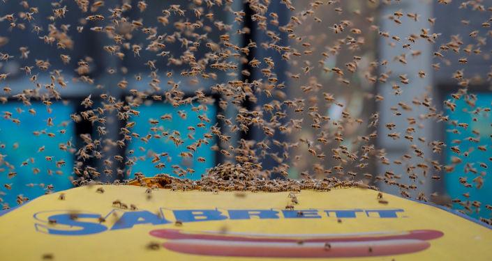 Milhares de abelhas atacam barraca de cachorro-quente em Manhattan