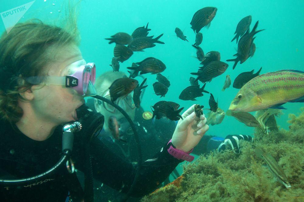 Mergulhador alimenta os peixes com mexilhões nas águas do mar Negro