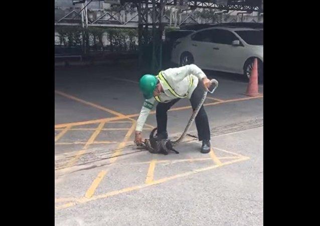 Homem salva gato do aperto de píton e recebe 'garras' como gratidão