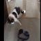 Gato dança balé após tocar em headphone