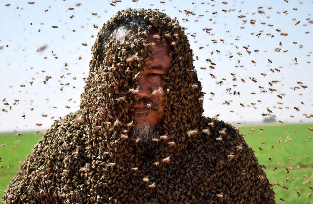 Homem saudita com corpo coberto de abelhas posa para foto em Tabuk, Arábia Saudita, em 11 de setembro de 2018