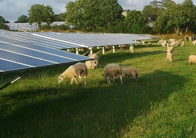 Fazenda solar com ovelhas pastando em Pembrokeshire, condado no sudoeste do País de Gales, Reino Unido