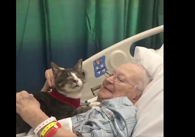 Paciente de hospital recebe carinho de seu companheiro felino durante internação