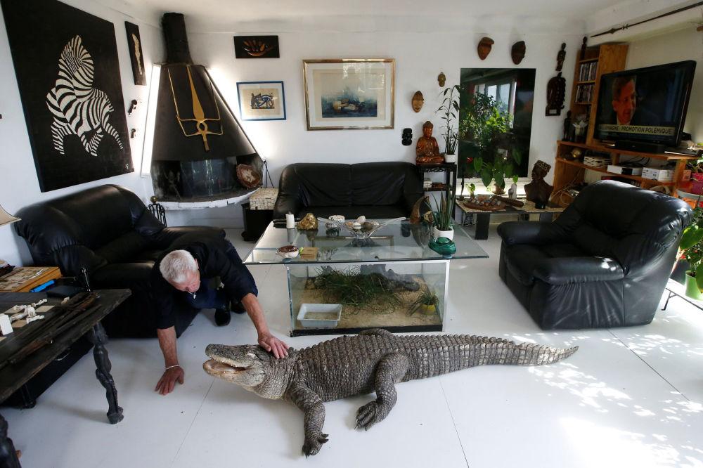 Imagem do francês Philippe Gillet, que vive com mais de 400 répteis em sua casa, fazendo carinho em um crocodilo na cidade francesa de Nantes
