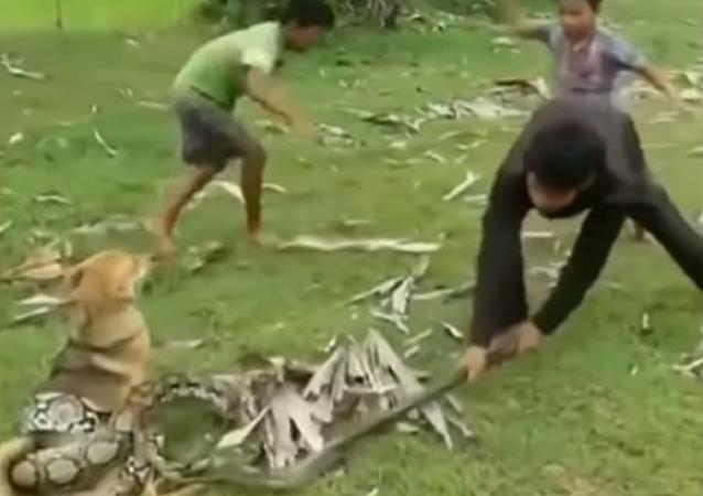 Crianças perdem medo de cobra e decidem enfrentá-la para salvar cão