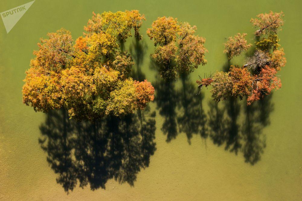 Ciprestes-de-folha-caduca no lago Sukko, na região russa de Krasnodar