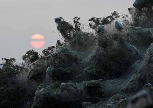 Pôr do Sol lança luz suave sobre floresta coberta por uma gigantesca teia de aranha nas proximidades do lago Vistonida, Grécia