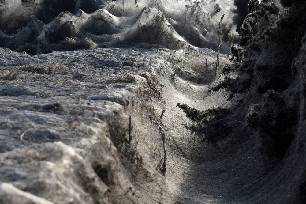 Teia de aranha, parecida com algodão-doce branco, envolve o solo ao redor do lago Vistonida, Grécia