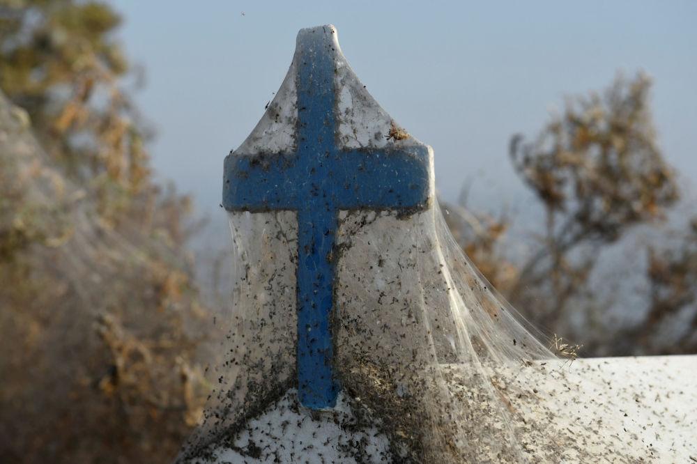 Teia de aranha cobre cruz perto do lago Vistonida, norte da Grécia