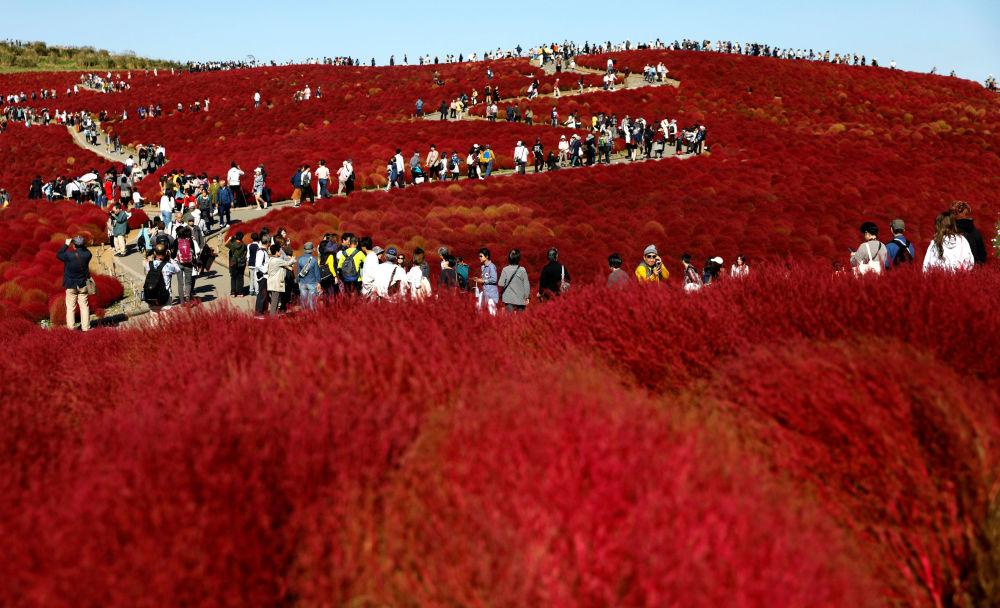 Campos de flores em um parque japonês
