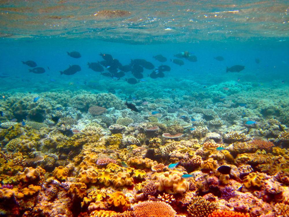 Grande Barreira de Coral na Austrália. Ao longo dos últimos 25 anos, a acidificação oceânica e subida da temperatura mataram cerca de 93% dos corais