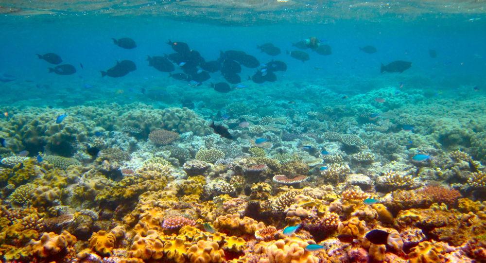 Grande Barreira de Coral na Austrália (imagem referencial)