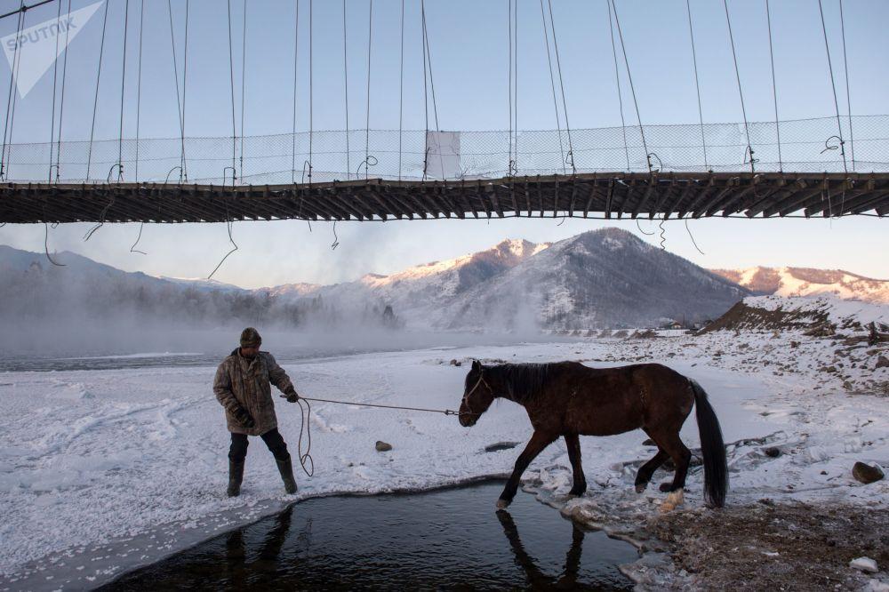Homem levando cavalo para beber água no rio Katun, na república de Altai