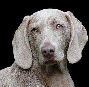 Um cachorro (imagem ilustrativa)