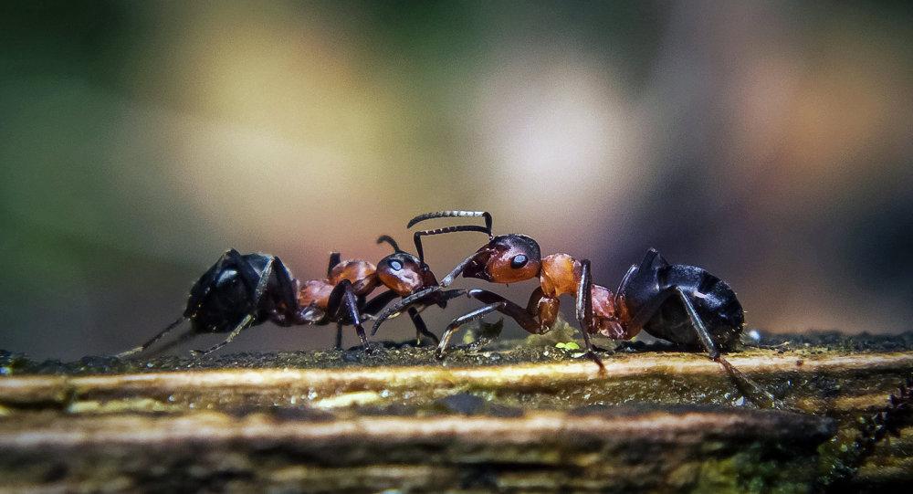 Formigas (imagem referencial)