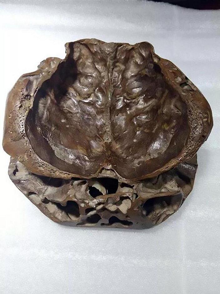 Alegado crânio alienígena pesquisado por Li Jianmin