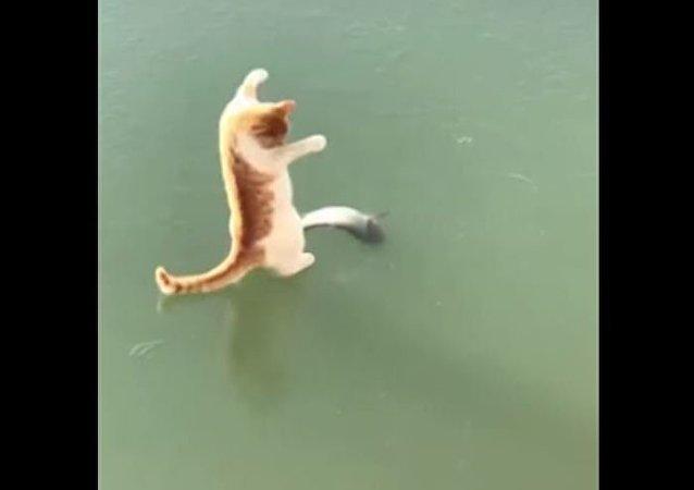 Que tal um sacolé? Gato desesperado tenta pegar peixe preso no gelo