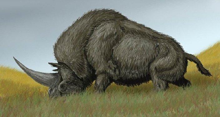 Elasmotherium sibiricum, conhecido como unicórnio siberiano