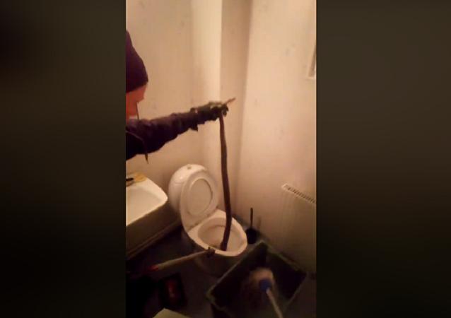 Cobra típica do Brasil é encontrada em vaso sanitário na Suécia