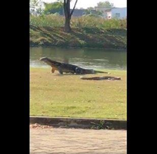 Serpente e lagarto em frente à Universidade de Mahidol, em Bangkok