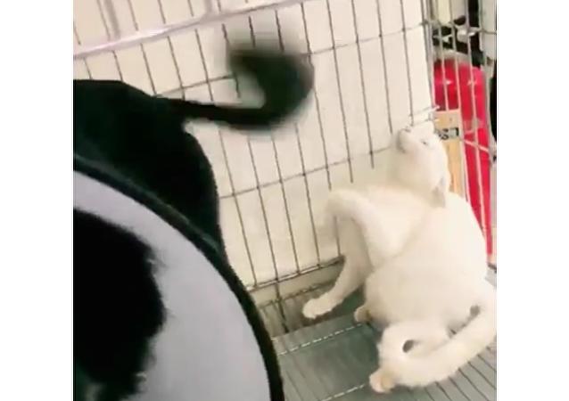 Cachorro atrapalhado bate com rabo na cara de gato várias vezes
