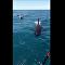 Grupo de orcas bate em barco e chacoalha pescadores