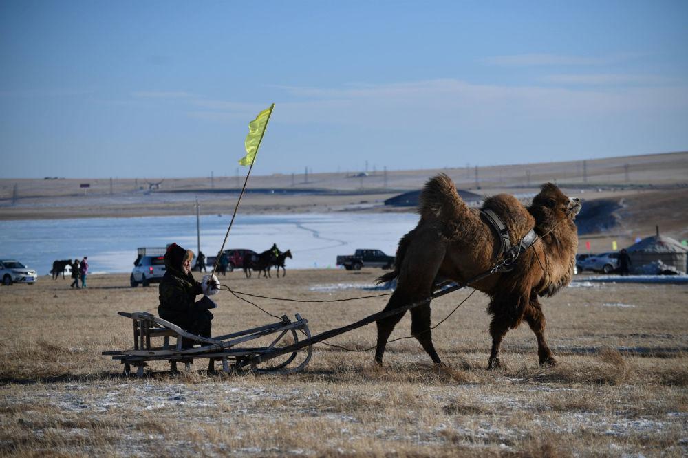 Homem passeia com camelo durante o inverno, na China