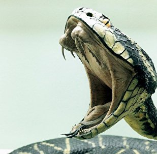 Cobra venenosa (imagem ilustrativa)