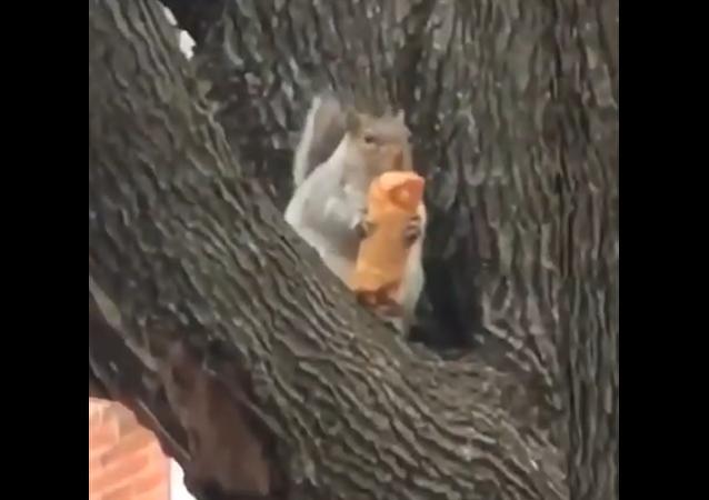 Esquilo come rolinho de ovo em NY