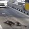 Píton aparece misteriosamente em rodovia tailandesa