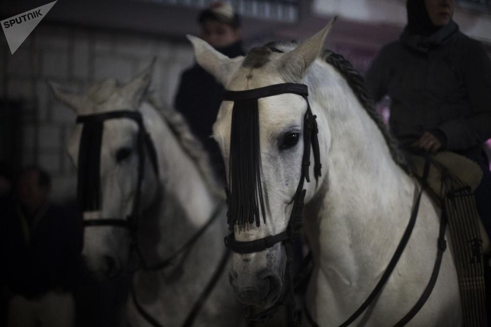 Cavalos antes do início do festival anual Las Luminarias na cidade espanhola de San Bartolomé de Pinares