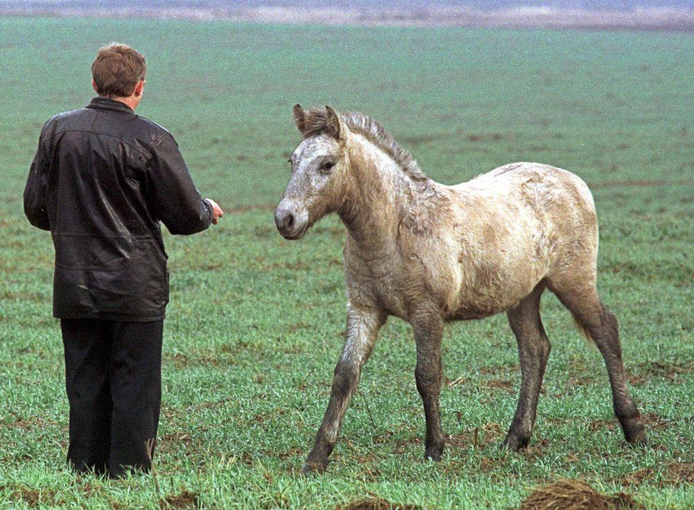 Agricultor atrai cavalo selvagem com isca em Chernobyl, em 10 de novembro de 2000