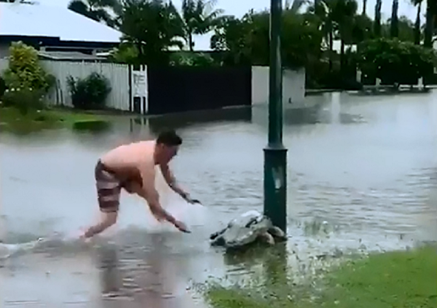 Australiano ensina ao filho como derrotar 'crocodilo' na frente de casa