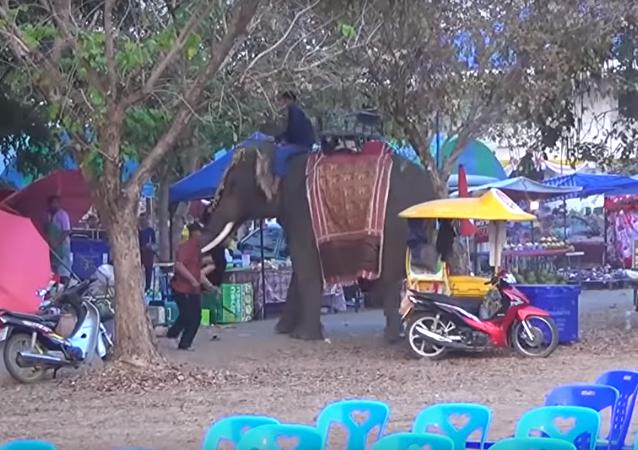 Adolescente se agarra em presa de elefante descontrolado na Tailândia