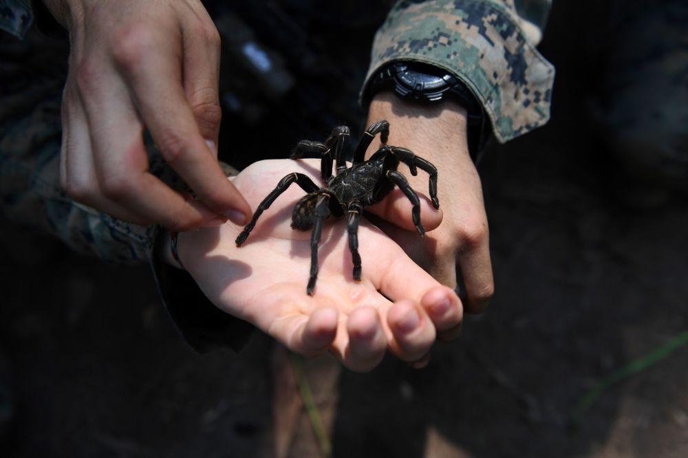 Fuzileiro naval norte-americano segura uma tarântula enorme no decorrer dos treinamentos de sobrevivência