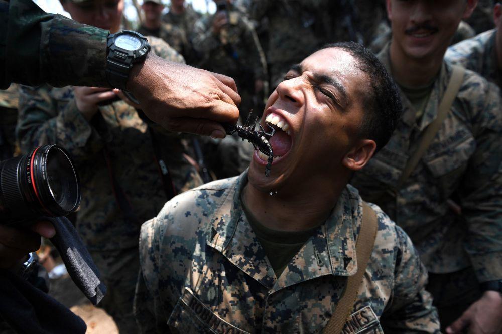 Norte-americano engole escorpião no decorrer de treinamentos de sobrevivência