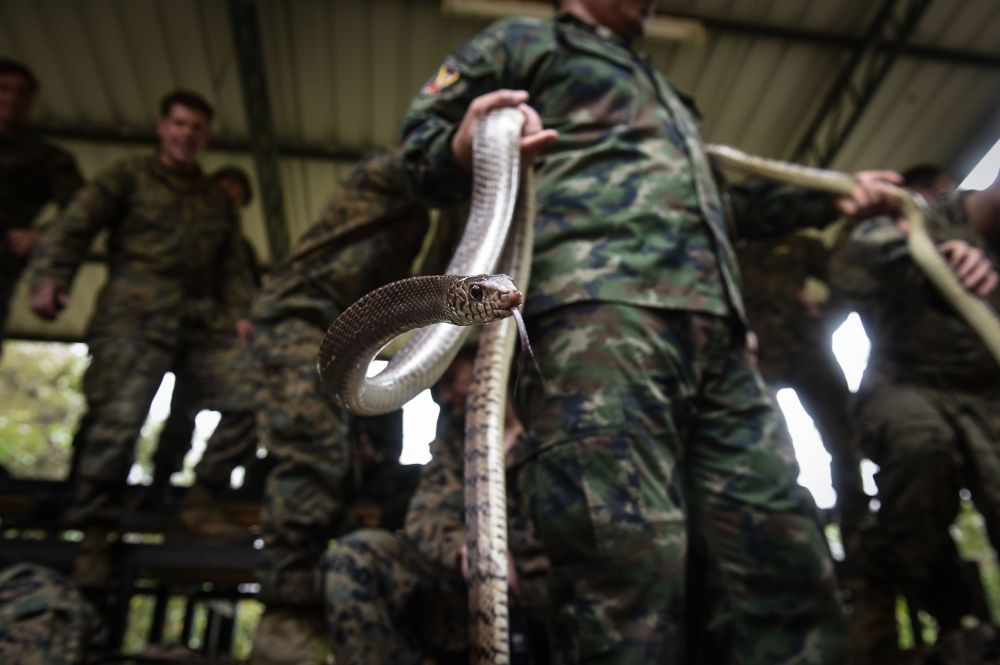 Fuzileiro naval da Tailândia segura cobra durante as manobras Cobra Gold