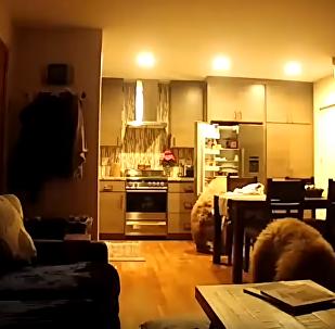 Ladrões profissionais de 4 patas: vários ursos invadem casa de americano