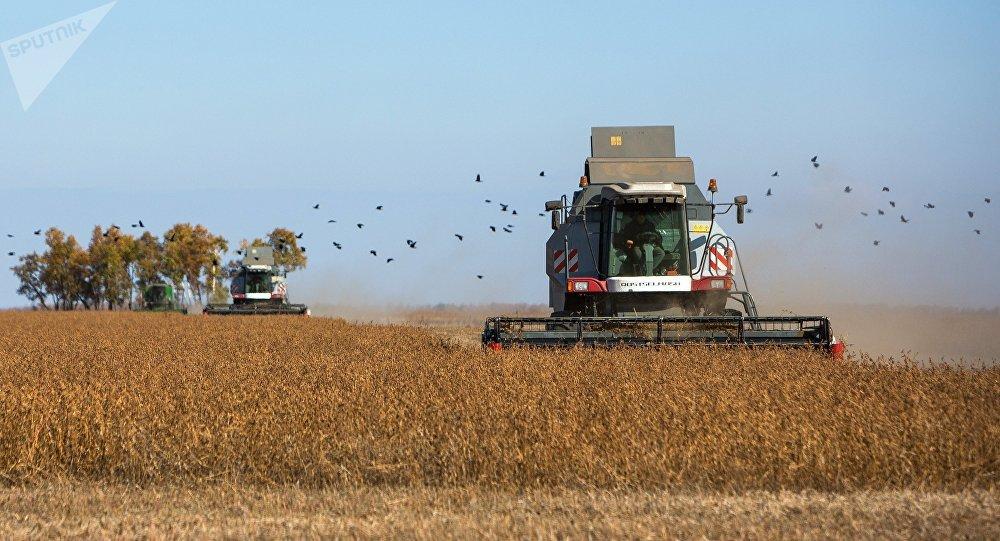Colheita da soja na região de Amur, na Rússia (imagem de arquivo)