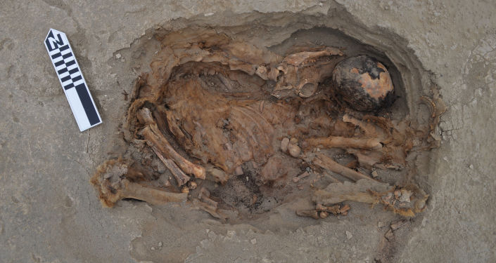 Esqueletos de criança e de espécies de camelídeos enterrados durante rituais de sacrifício no Peru, datado do século XV