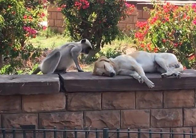Macaco faz carinho em cachorro no parque