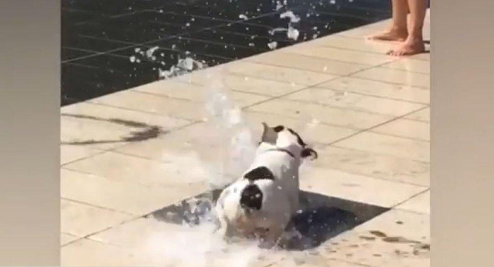 Cachorro se diverte com fonte de água no parque