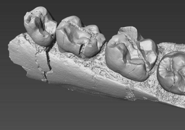 Modelo 3D de dentes de primata Alophia metios que viveu no noroeste do Quênia