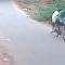 Serpente ataca ciclistas na Índia