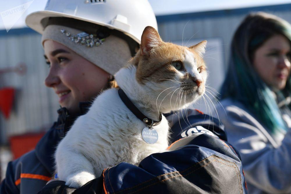 Gato batizado de Mostik (Pontezinha em russo) nas mãos de uma construtora da ponte da Crimeia