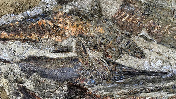Fósseis de peixes achados no depósito de Tanis, no estado norte-americano da Dakota do Norte